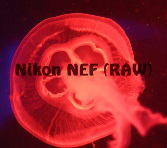 Hintergrundanalyse zu den Nikon NEF (RAW) Formaten