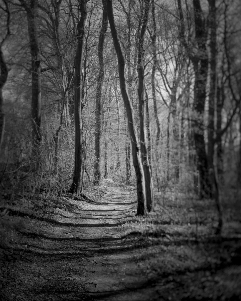Beispiel für analoge Fotografie: Wald mit der Linhof Technika