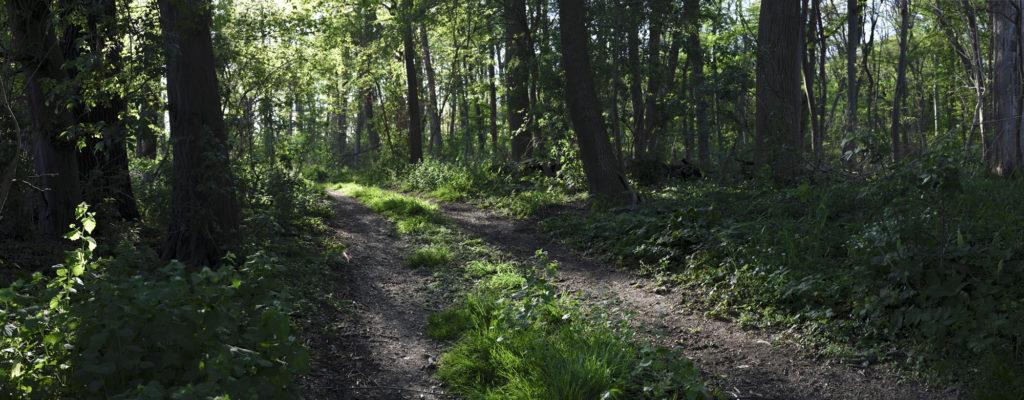 Panorama Foto aus dem Haseder Busch