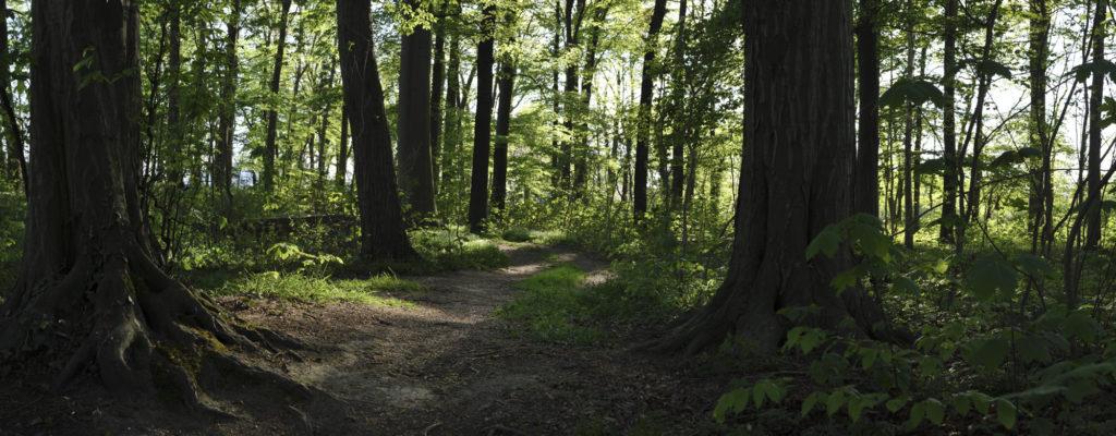 Panorama Foto im Wald