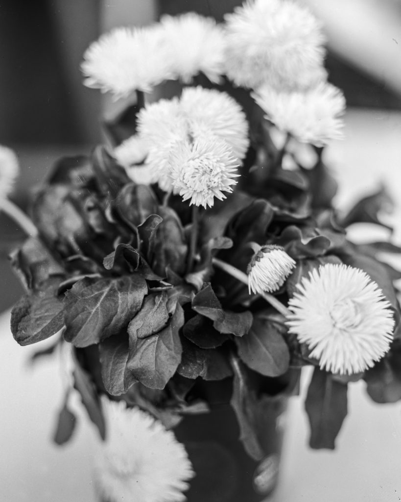 Beispiel für analoge Fotografie: Blume mit der Linhof Technika