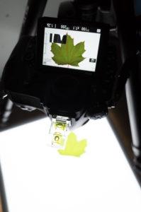 Nikon D850 im Liveview Modus. Die Kanten werden Rot im Display angezeigt. Die Blätter können seh gut eingefangen werden