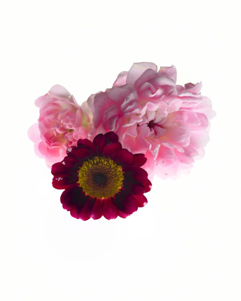 Buschrosen Sommerblume Makro Aufnahme Nikon D850
