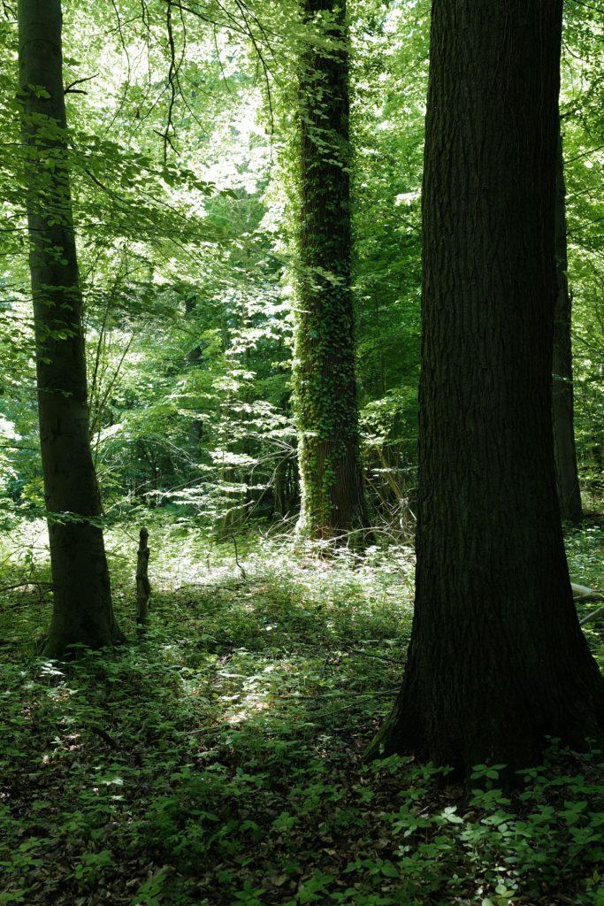 Wald Leica SL2